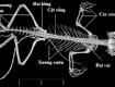 So sánh bộ xương thằn lằn với bộ xương ếch chi tiết nhất